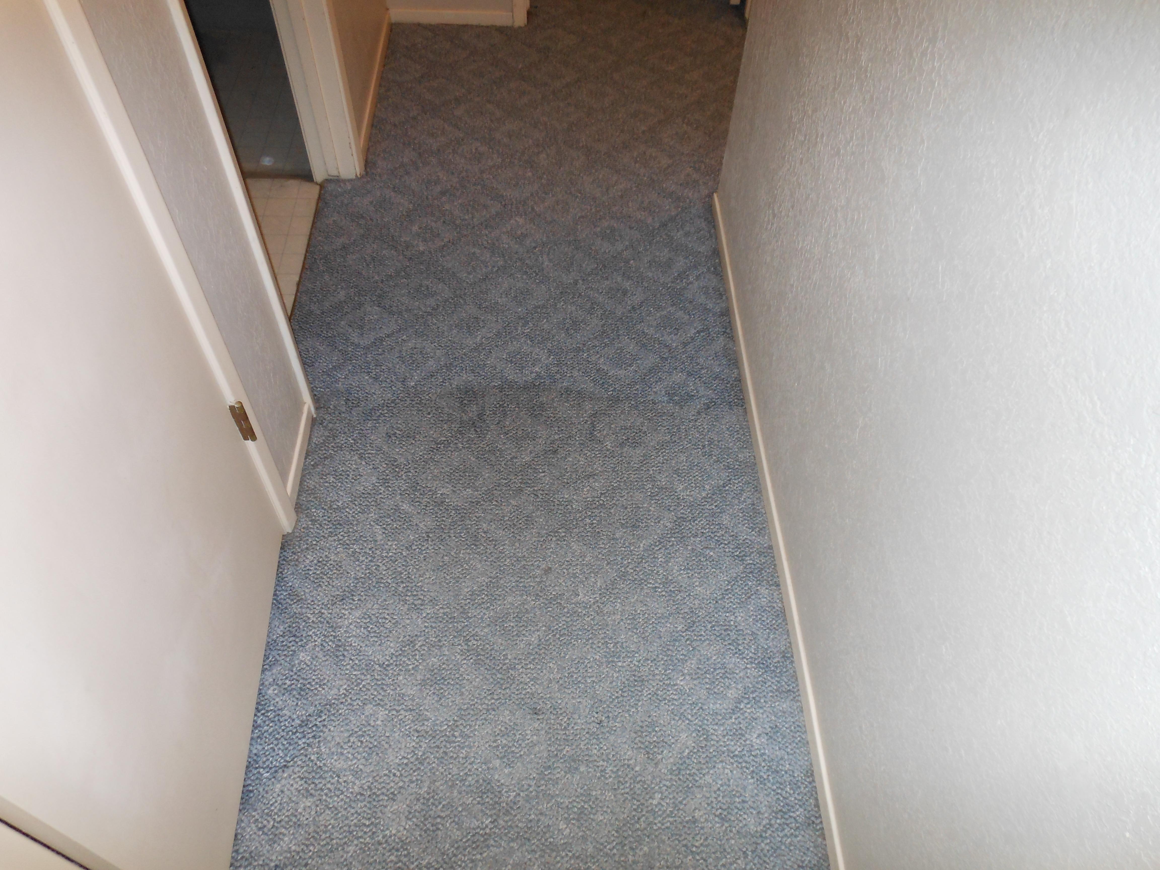 carpet 051